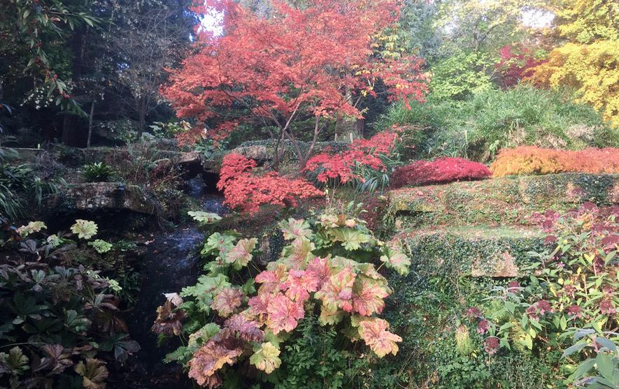 Jobs to do in the November Garden Oxford Garden Design