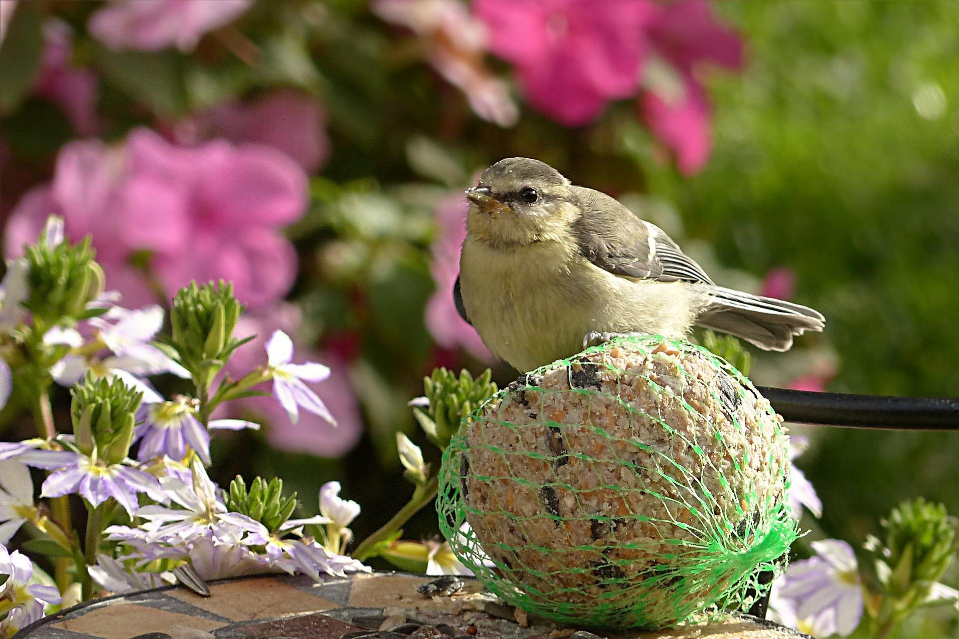 garden design for birds