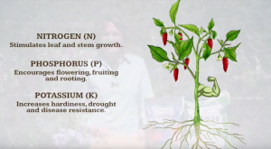 synthetic fertiliser