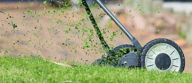 More jobs to do in the garden this June Oxford Garden Design