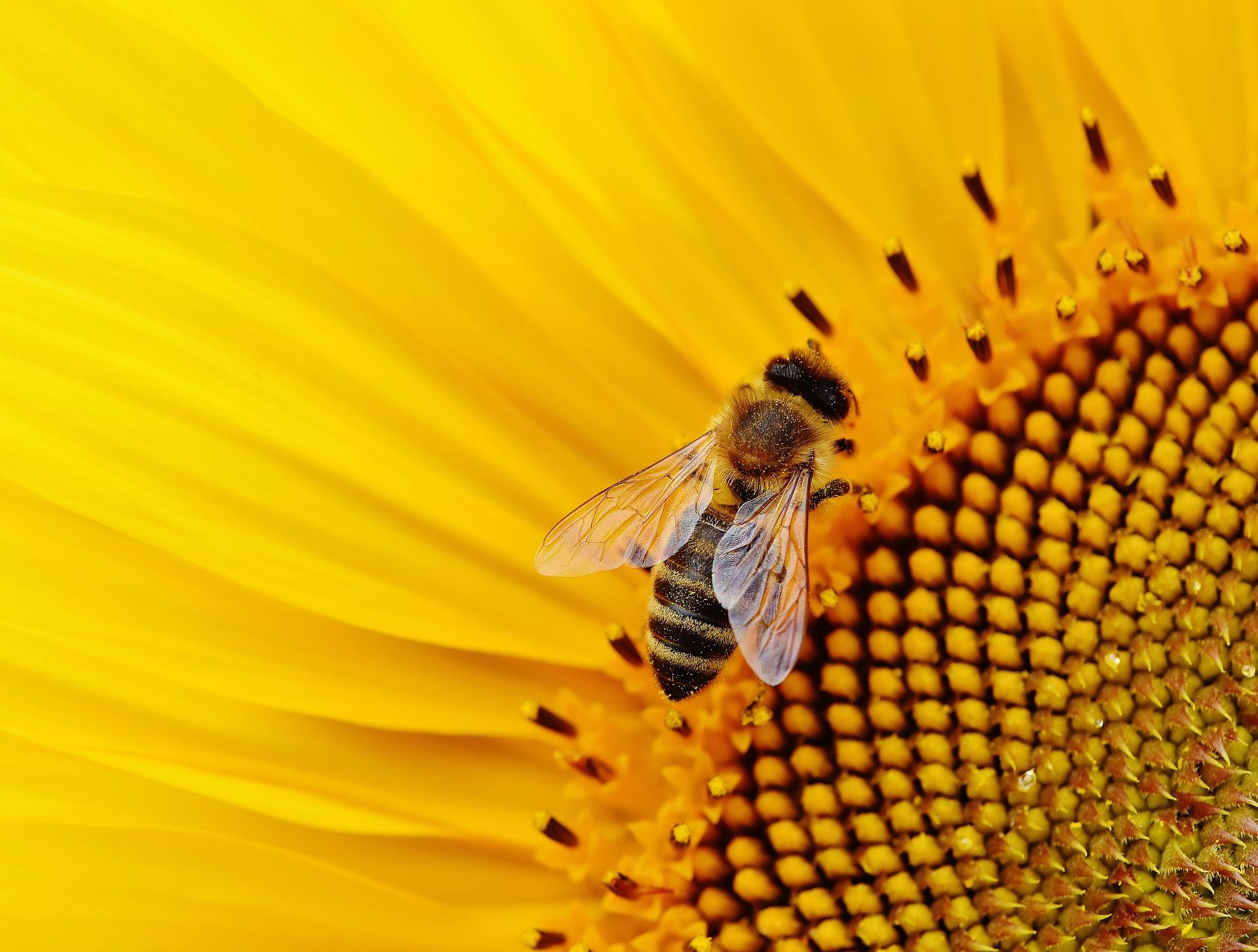 Bees Garden Design Oxfordshire