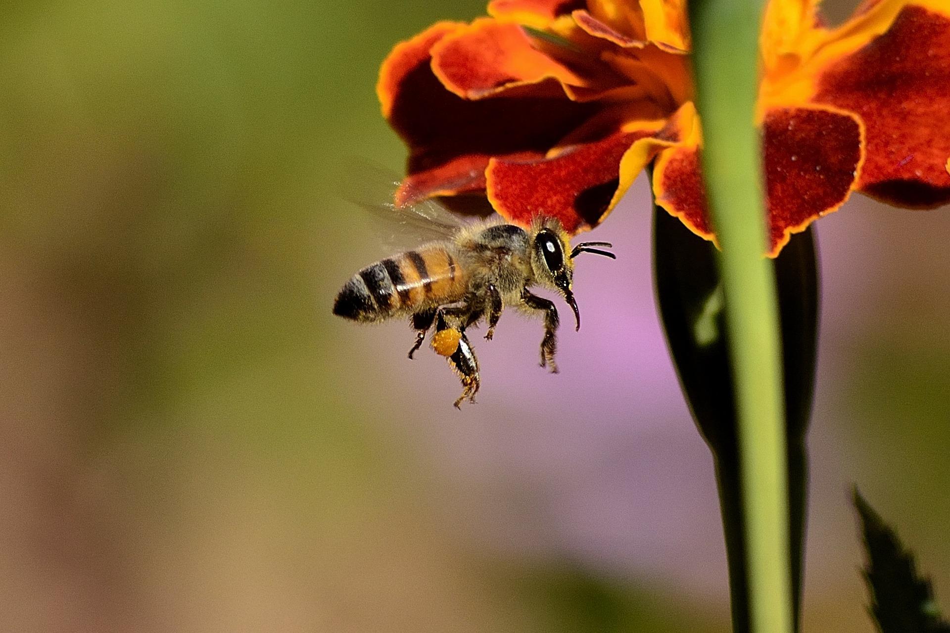 Bees in garden design