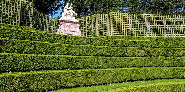 More jobs for the January garden - Oxford Garden Design