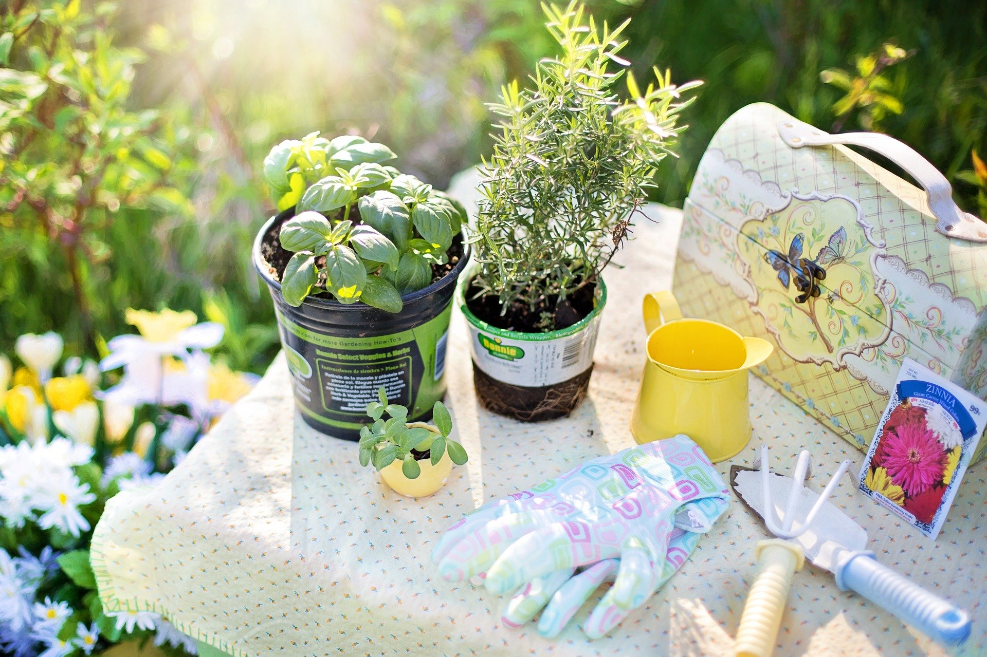 using herbs for medicinal purposes