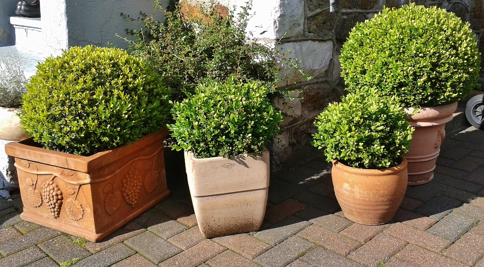 shrubs in containers