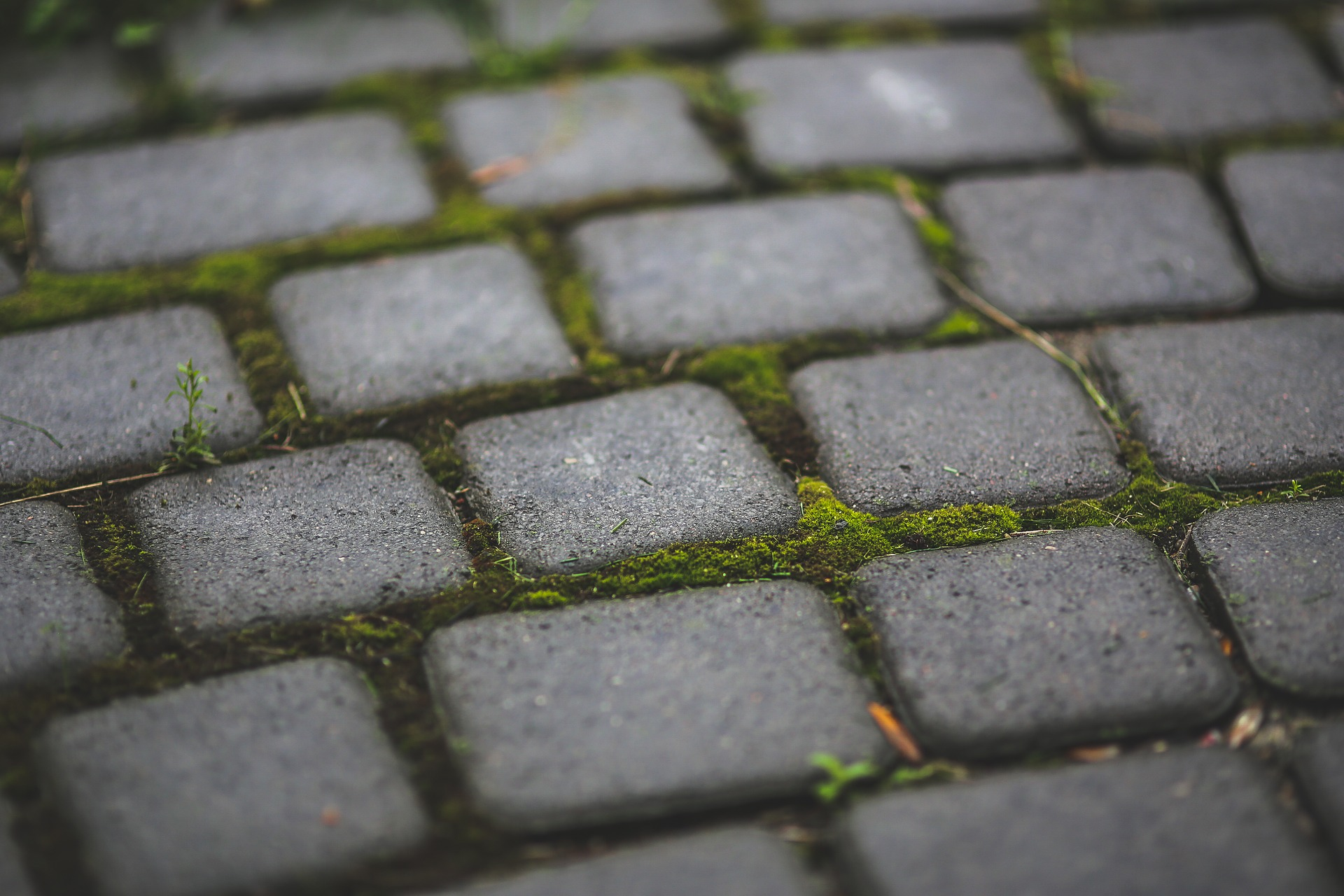 a mossy patio needs cleaning in spring