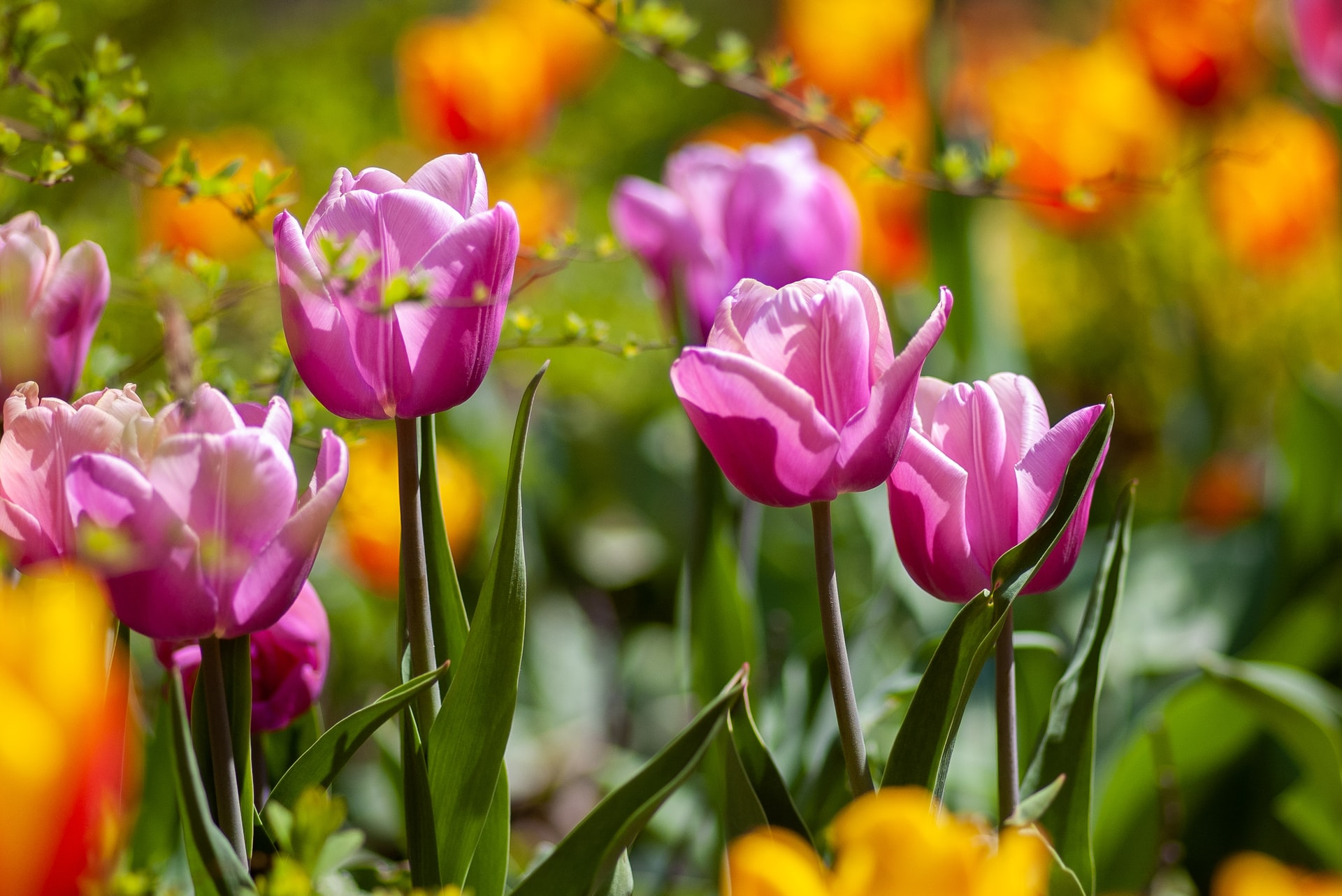 """Featured image for """"Things to Keep You Busy in the April Garden"""""""