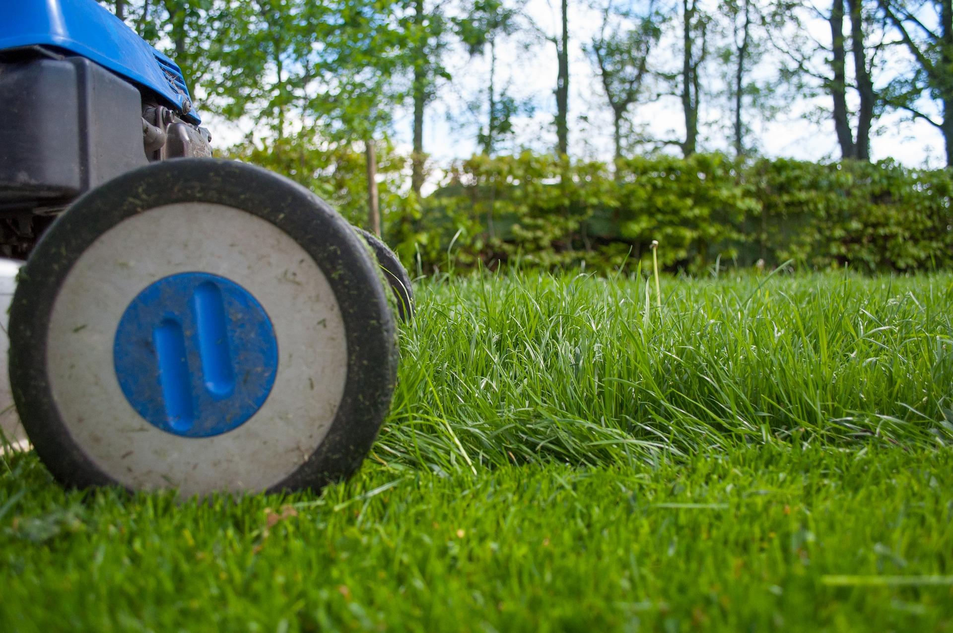 "Featured image for ""Summer Garden Maintenance Tips"""