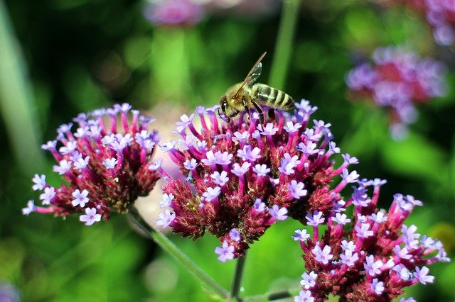 Bee friendly plant