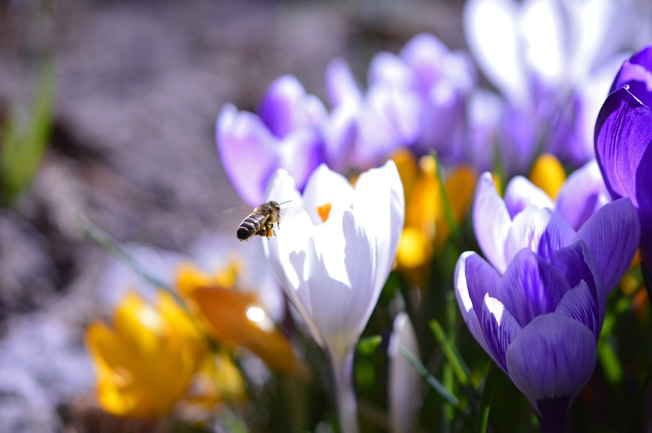 """Featured image for """"How to help honey bees – in the garden"""""""