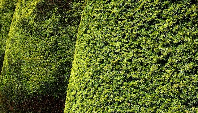 "Featured image for ""September Garden Maintenance Tips"""